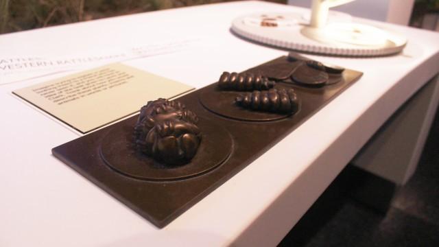 Tactile Model - Rattlesnake